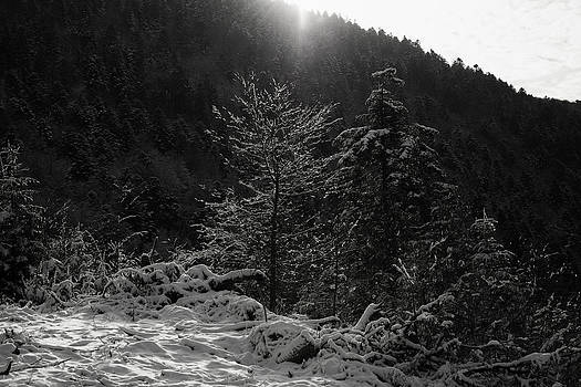 Sunray on a tree in winter by Patrick Kessler