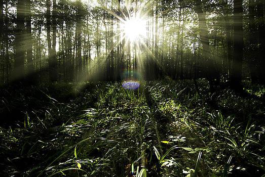 Sunrays by Henrik Petersen