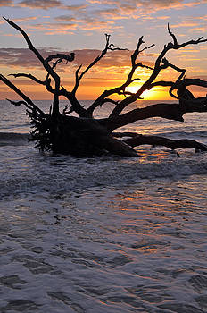 Sunrise at Driftwood Beach 6.4 by Bruce Gourley