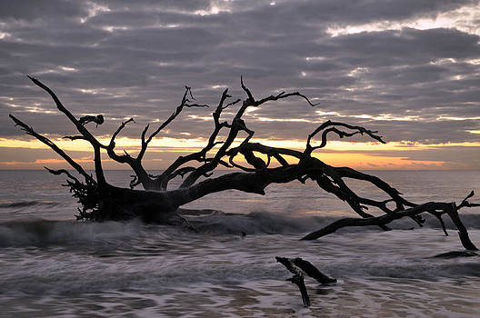 Sunrise at Driftwood Beach 6.5 by Bruce Gourley