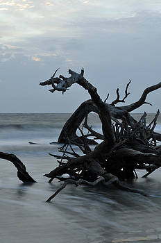 Sunrise at Driftwood Beach 6.7 by Bruce Gourley