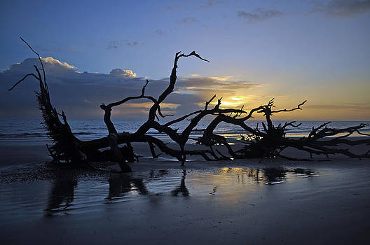 Sunrise at Driftwood Beach 7.5 by Bruce Gourley