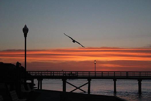 Sunrise at the beach trio by Renee Braun