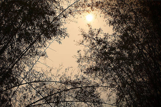Sunrise Bamboo Thailand by Duane Bigsby