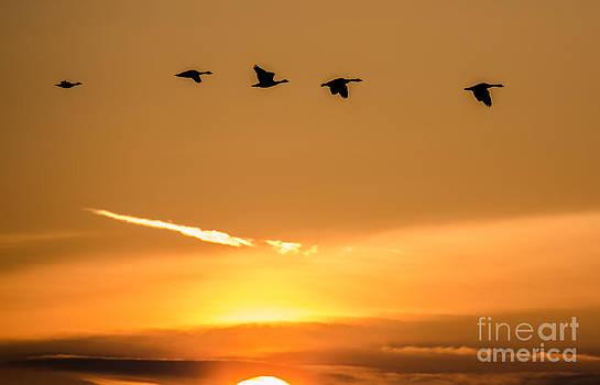 John Daly - Sunrise Flight