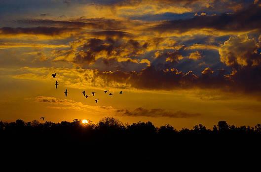 Sunrise Geese by Paul Geilfuss
