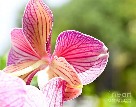 Michelle Wiarda-Constantine - Sunrise in an Orchid