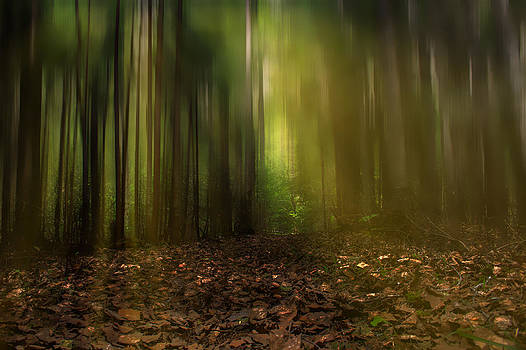 Sunrise in the Forest by Gary Smith