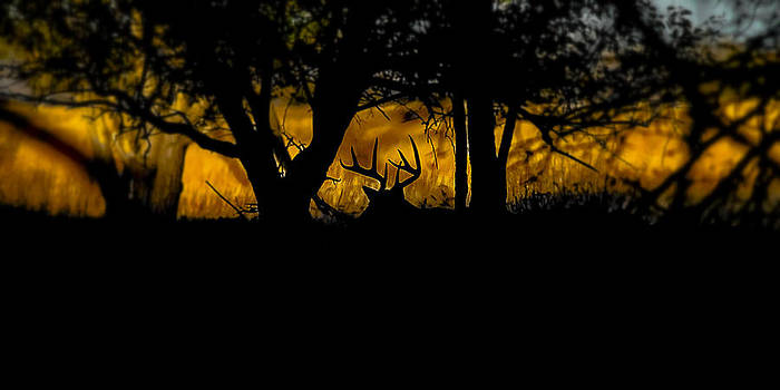Sunrise In The Timber by Garett Gabriel