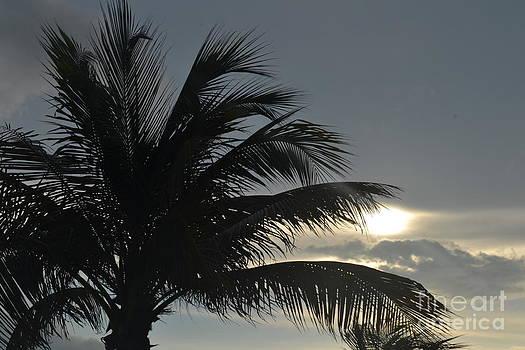 Sunrise Mexico by Wayne Pellenberg