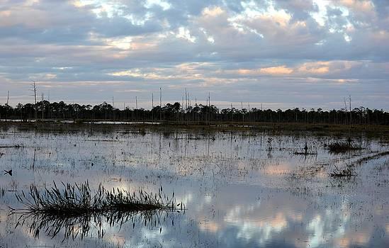 Patricia Twardzik - Sunrise on a Florida Marsh