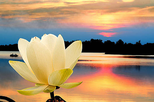 Randall Branham - Sunrise on Lotus Lillie