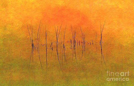 Andrea Kollo - Sunrise on the Bay