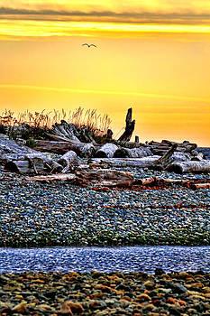 Peggy Collins - Sunrise on the Beach