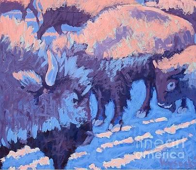 Sunrise on the Buffalo by Stephen Wysocki