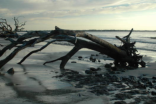 Sunrise over the Driftwood by Sheri Heckenlaible