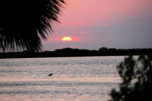 Sunrise over the Indian River by Suzie Banks