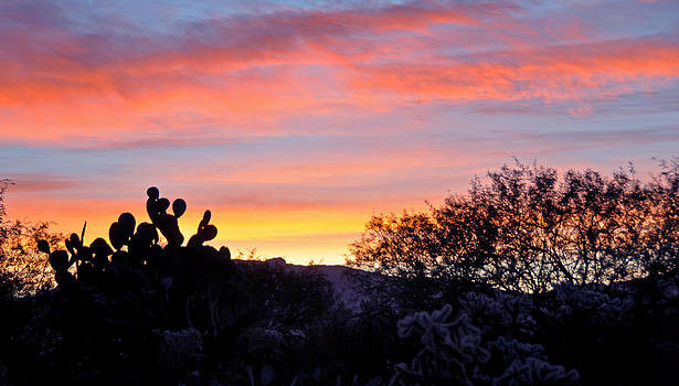 Sunrise Over The Sonoran Desert by Jon Van Gilder