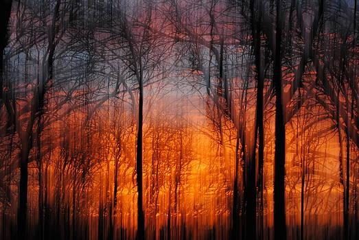 Sunrise Painted Forest Fire by Amanda Lomonaco
