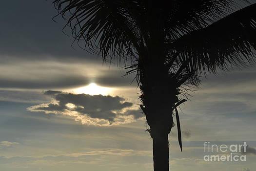 Sunrise Palm Mexico by Wayne Pellenberg