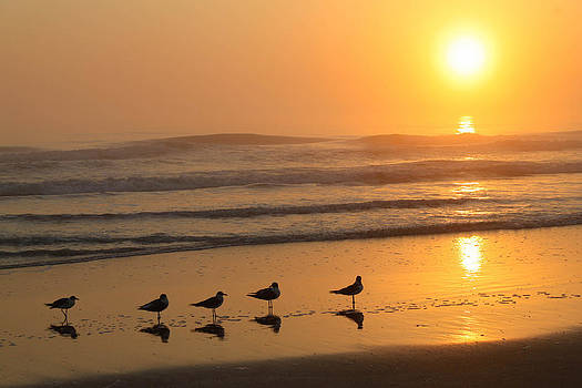 Sunrise Seagulls by Donna Vasquez