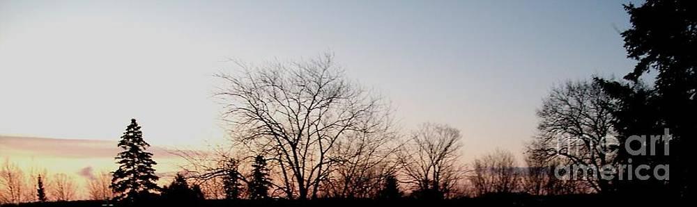 Gail Matthews - Sunrise show Trees Silhouette