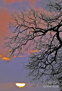 Darren Burroughs - Sunrise Silhouette