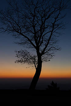 Sunrise Silhouette by Kaye Seaboch