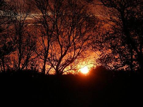 Sunrise Splendor by Anne Peters