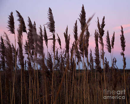 Sunrise Through The Marsh Grass by Deborah  Smith