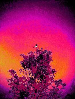 Sunrise to Sunset Nature is Beautiful by David Mckinney