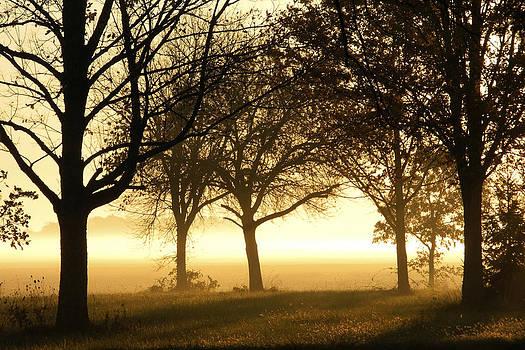 Sunrise Trees by Daniel J Kasztelan