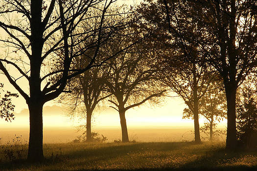 Daniel J Kasztelan - Sunrise Trees