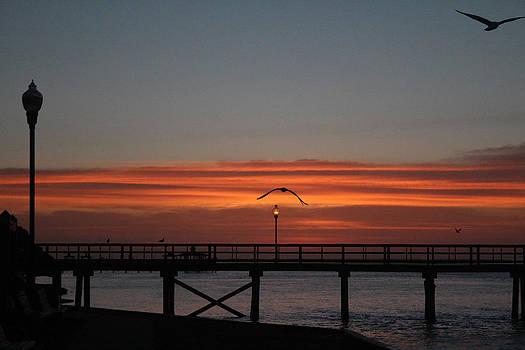 Sunrise trio at beach....1 of 3 by Renee Braun