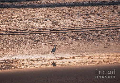 Sunrise Wave by Denise Ellis