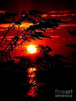 Sunrise Wheat by Donnie Freeman