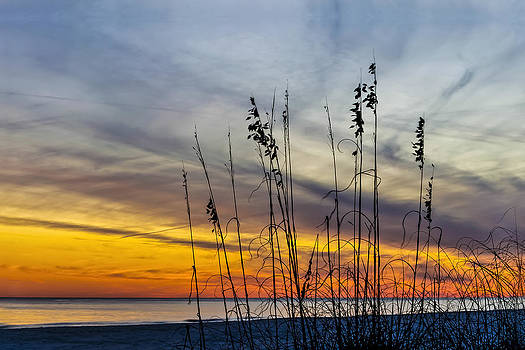 Sunset and Grasses by Gej Jones