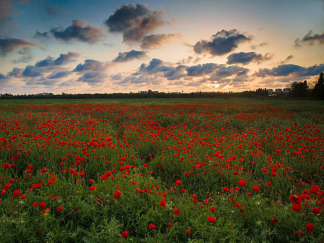 Sunset and Poppies by Meir Ezrachi