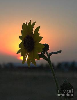 Mae Wertz - Sunset and Sunflower
