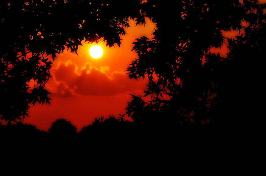Sunset And Tree by SW Johnson