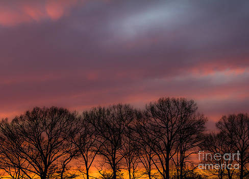 Sunset and Trees by Ursula Lawrence