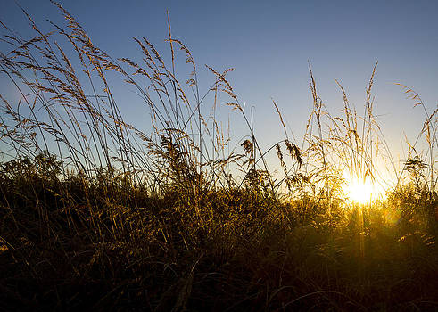 Sunset and Weeds  by Tim Fitzwater