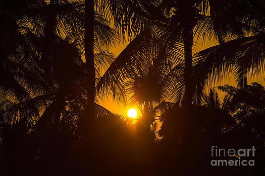 Sunset At Coconut Tree by Vorakorn Kanokpipat