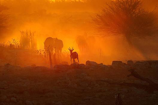 Sunset at Okaukeujo by Grobler Du Preez