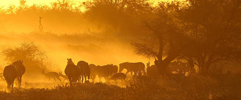 Sunset at Okaukeujo in Namibia by Grobler Du Preez