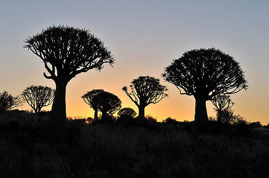 Sunset at the Quiver Tree Forest in Namibia by Grobler Du Preez