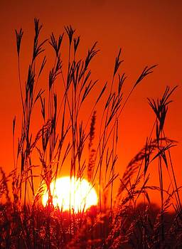 Sunset at the Sweet Marsh by Lori Frisch