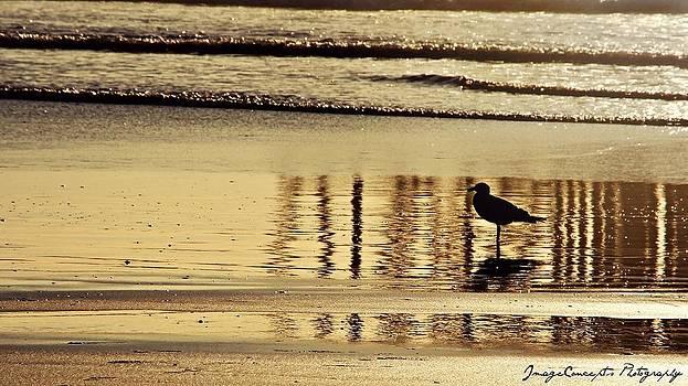 Sunset Beach by Emily Fidler