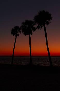 Sunset Beach Silhouette by J Michael Nettik