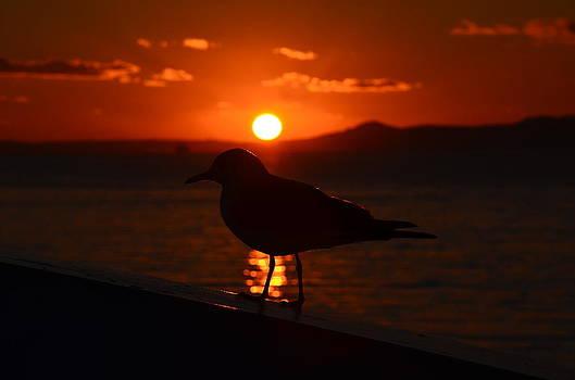 Sunset behind the Seagull by Kivanc Ekinci